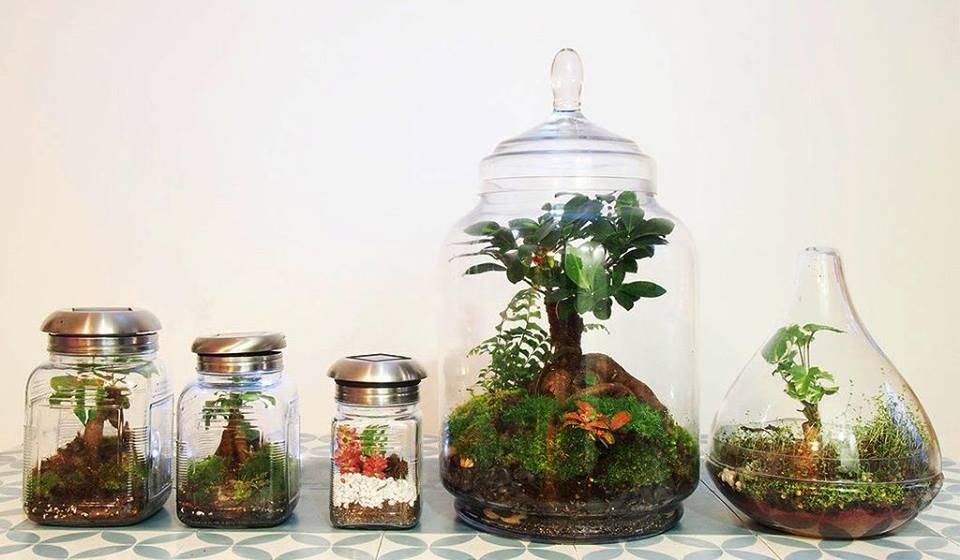 Mini salaire mini chien mini studio et maintenant la mini serre rue lucien sampaix l - Boule en verre pour plante ...