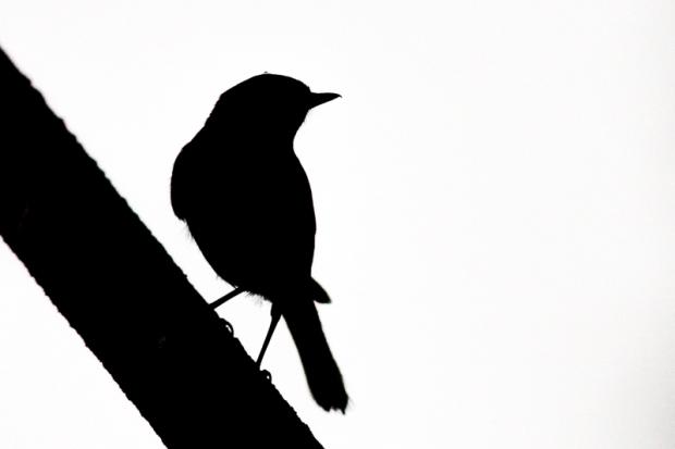 balade_photo_oiseaux-3.jpg