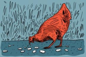illustration-la-poule
